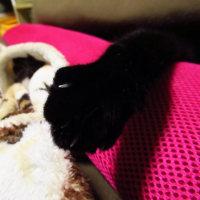 黒猫出没注意!