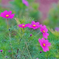 晩秋の花々(都市農業公園)