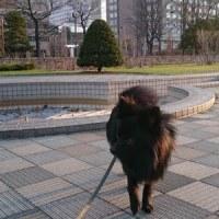 朝のお散歩『大通公園』