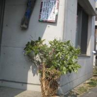 第13回クラフト展(イエツァオグループによる)の報告NO3玄関の花