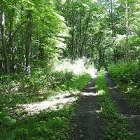 野幌自然休養林に行って来ました -3/3- (平成29年06月17日)。