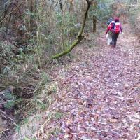 13 夫婦岩山(240m:山口県周南市)登山  なだらかな路になって