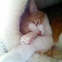 眠りこけるネコ