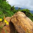 尾瀬至仏山 山の鼻から登り道