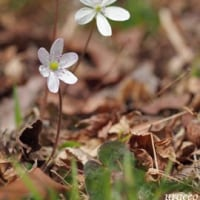 日曜日の小さな花