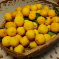 柚子の収穫を次女が終了させてくれました。感謝です。