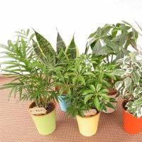 カラフルプラミックス ミニ観葉植物仕様