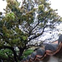 ハルタビ * 沖縄