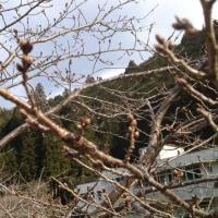 '17 3/28(火) 本日の練習(*^_^*)