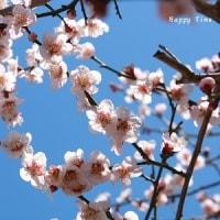 梅の季節に「梅」は敷居が高い・・かな