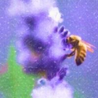 Herkimer Deram - Lost 3 stories - Phacelia -