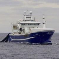 ブルーホワイテング漁は好調  ノルウエー