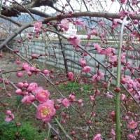 春の嵐の中・・・