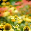 イガグリ頭がいっぱい:京都府立植物園