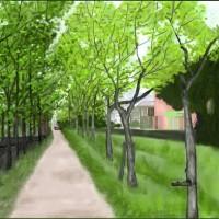 五月の並木道