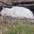 猫はお昼寝、カラスは死んで…多摩川夏景色シリーズ