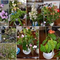 2017我が家の春の花20種