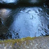 寒波! 池に氷が張りました!