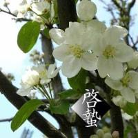 早咲きのりんごの蕾はほころんでいるだろうか。啓蟄。