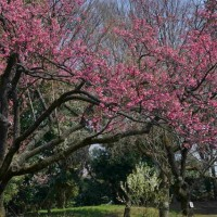 神代植物公園:終わり