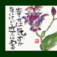 ホトトギスの花(絵手紙)