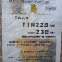 神戸の大銀杏