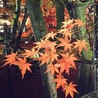晩秋の京都バスツアー、その2