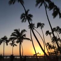 ヤシの木に囲まれて in Hawaii♡