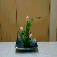 チューリップの格花