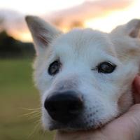 愛犬まるの介護中に出会った白ニャンコ