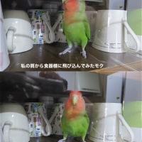 親バカモクちゃん特集+α