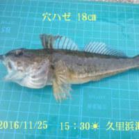 笑転爺の釣行記 11月25日☀ 長瀬・久里浜