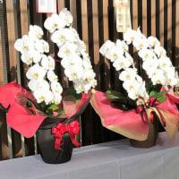 贈り物の胡蝶蘭
