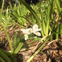 花粉症の季節にオーガニックコットンのタオル