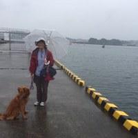 梅雨空・・・・今日もダメ・・・・・