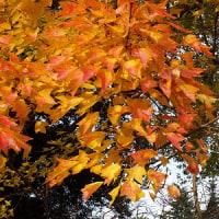 過ぎゆく秋を追って