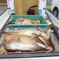 8月28日有害鳥獣捕獲「鹿」