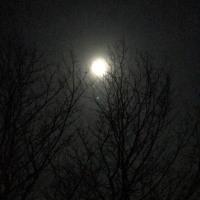 月に木々2