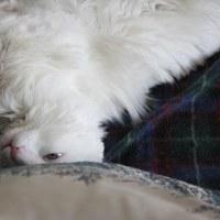 深夜雑談:忙しかった週末に、猫