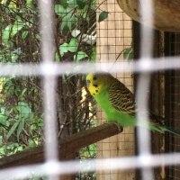Freebird(modern Australian cuisine)@スクンビットソイ47