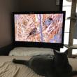 くー    テレビを観るってこういう事でしょう?