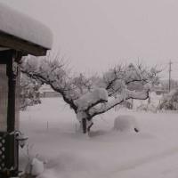 正月終わって大雪