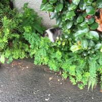 猫探し……どこにいるかもうわかるよね