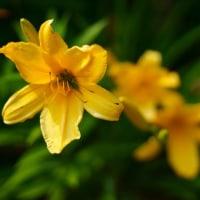 武蔵丘陵森林公園 ボーダー花壇