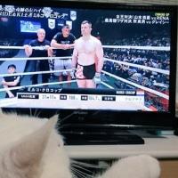 9月25日(日)のつぶやき ミルコ・クロコップ 白猫ミルコ 藤田和之 引退表明 RIZIN