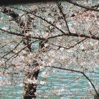 春、到来♪