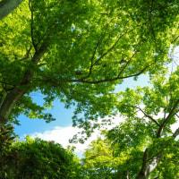 もうすぐ五月 爽やかな青葉でいっぱいの長谷寺