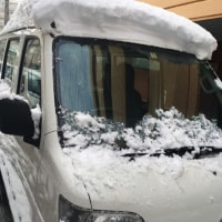 雪にも負けず!