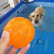 【2回目の簡易プールの水遊びでもオレオもクッキーも大はしゃぎ】