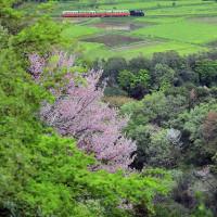 小湊鐵道2017.4 #14 ~ 山桜 ~